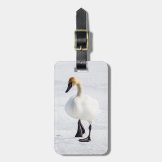 Wyoming, National Elk Refuge, Trumpeter Swan 1 Bag Tag