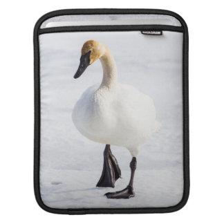 Wyoming, National Elk Refuge, Trumpeter Swan 1 iPad Sleeve
