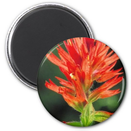 Wyoming Paintbrush Magnet