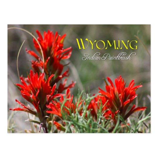 Wyoming State Flower Indian Paintbrush Postcard Zazzle Com