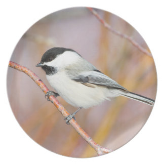 Wyoming, Sublette County, Black-capped Chickadee Dinner Plate