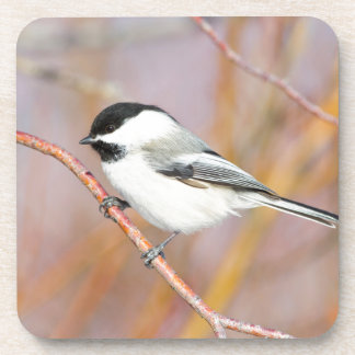 Wyoming, Sublette County, Black-capped Chickadee Drink Coaster