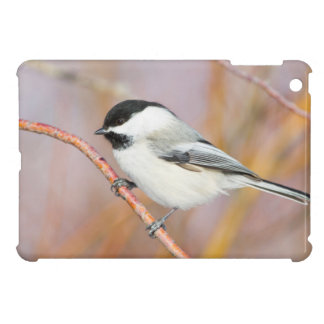 Wyoming, Sublette County, Black-capped Chickadee iPad Mini Cover