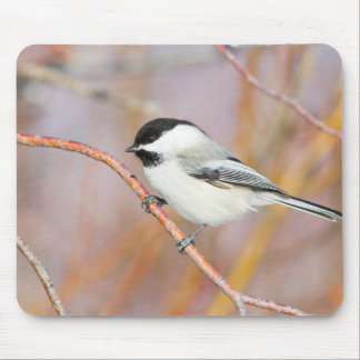 Wyoming, Sublette County, Black-capped Chickadee Mouse Pad