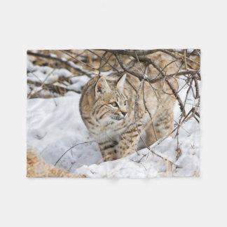 Wyoming, Sublette County, Bobcat in winter Fleece Blanket