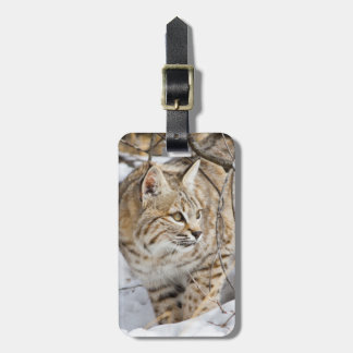 Wyoming, Sublette County, Bobcat in winter Luggage Tag