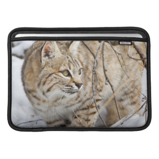 Wyoming, Sublette County, Bobcat in winter MacBook Air Sleeve