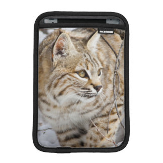 Wyoming, Sublette County, Bobcat in winter Sleeve For iPad Mini