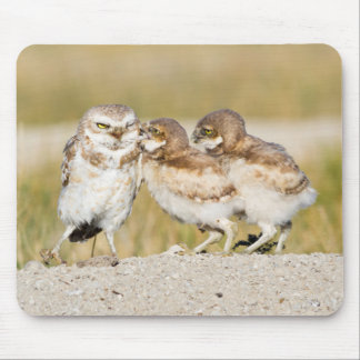 Wyoming, Sublette County, Burrowing owl chicks Mouse Pad