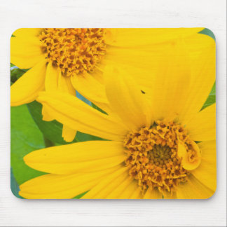 Wyoming, Sublette County, Close-up of two Arrow Mouse Pad
