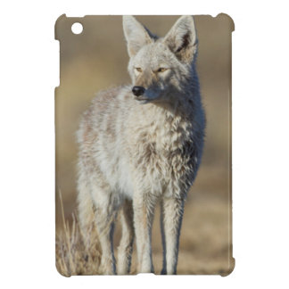 Wyoming, Sublette County, Coyote in morning iPad Mini Case