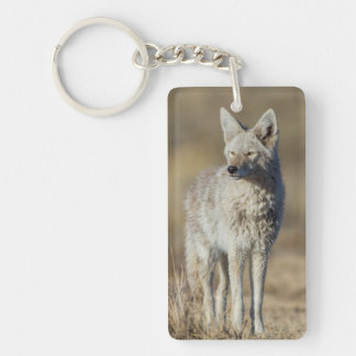 Wyoming, Sublette County, Coyote in morning Keychain