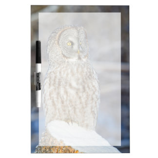 Wyoming, Sublette County, Great Gray Owl 1 Dry-Erase Board