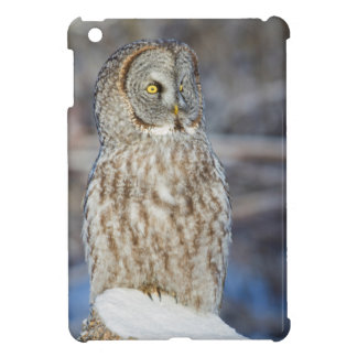Wyoming, Sublette County, Great Gray Owl 1 iPad Mini Case