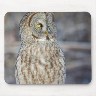 Wyoming, Sublette County, Great Gray Owl 1 Mouse Pad
