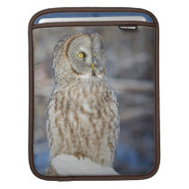 Wyoming, Sublette County, Great Gray Owl 1 Sleeve For iPads