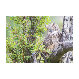 Wyoming, Sublette County, Great Horned Owl 1 Canvas Print