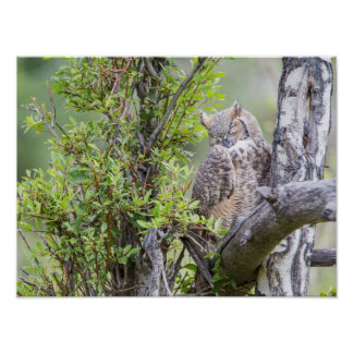 Wyoming, Sublette County, Great Horned Owl 1 Poster