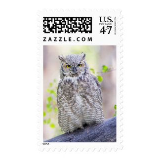 Wyoming, Sublette County, Great Horned Owl 2 Postage