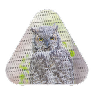 Wyoming, Sublette County, Great Horned Owl 2 Speaker