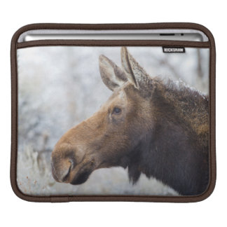 Wyoming, Sublette County, head shot of cow Moose iPad Sleeve