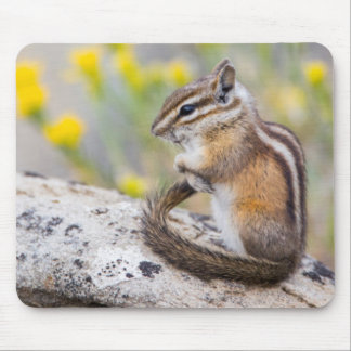 Wyoming, Sublette County, Least Chipmunk Mouse Pad
