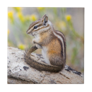 Wyoming, Sublette County, Least Chipmunk Tile