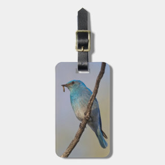 Wyoming, Sublette County, Male Mountain Bluebird Luggage Tag