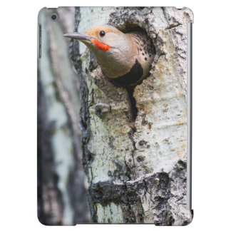 Wyoming, Sublette County, Male Northern Flicker Case For iPad Air