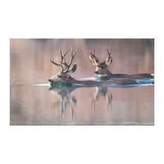 Wyoming, Sublette County, Mule deer bucks Canvas Print