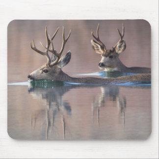 Wyoming, Sublette County, Mule deer bucks Mouse Pad