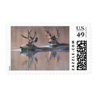 Wyoming, Sublette County, Mule deer bucks Postage