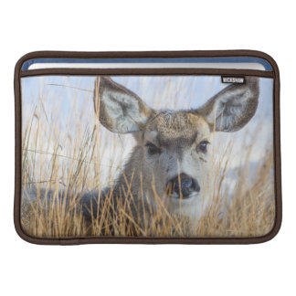 Wyoming, Sublette County, Mule Deer doe resting MacBook Sleeves