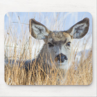 Wyoming, Sublette County, Mule Deer doe resting Mouse Pad