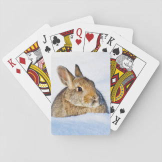 Wyoming, Sublette County, Nuttall's Cottontail 1 Card Decks