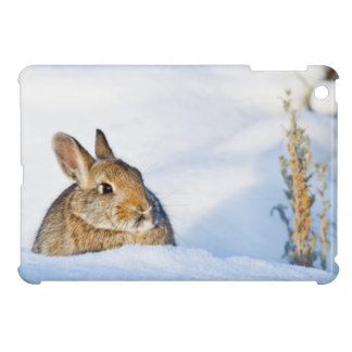 Wyoming, Sublette County, Nuttall's Cottontail 1 Cover For The iPad Mini