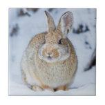 "Wyoming, Sublette County, Nuttall&#39;s Cottontail 2 Ceramic Tile<br><div class=""desc"">Wyoming,  Sublette County,  Nuttall&#39;s Cottontail Rabbit in snow. | Elizabeth Boehm / DanitaDelimont.com</div>"