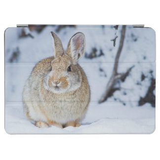 Wyoming, Sublette County, Nuttall's Cottontail 2 iPad Air Cover