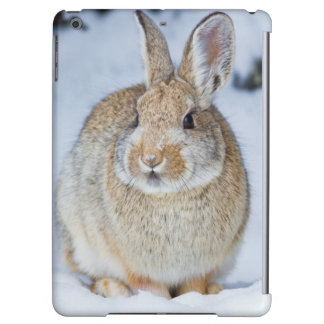 Wyoming, Sublette County, Nuttall's Cottontail 2 iPad Air Covers