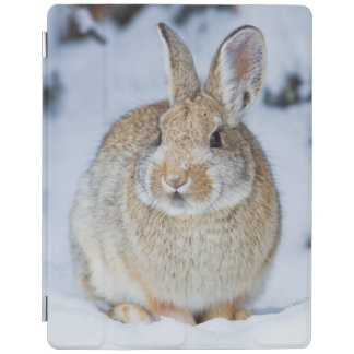 Wyoming, Sublette County, Nuttall's Cottontail 2 iPad Smart Cover