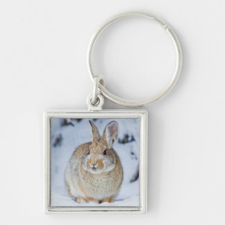 Wyoming, Sublette County, Nuttall's Cottontail 2 Keychain