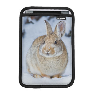 Wyoming, Sublette County, Nuttall's Cottontail 2 Sleeve For iPad Mini
