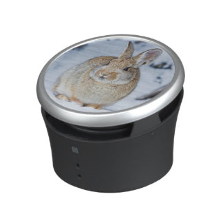 Wyoming, Sublette County, Nuttall's Cottontail 2 Speaker