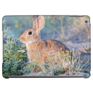 Wyoming, Sublette County, Nuttall's Cottontail 3 Cover For iPad Air