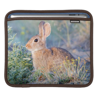 Wyoming, Sublette County, Nuttall's Cottontail 3 iPad Sleeve