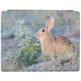 Wyoming, Sublette County, Nuttall's Cottontail 3 iPad Smart Cover