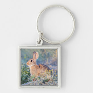 Wyoming, Sublette County, Nuttall's Cottontail 3 Keychain