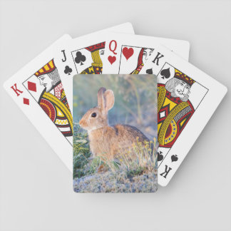 Wyoming, Sublette County, Nuttall's Cottontail 3 Playing Cards