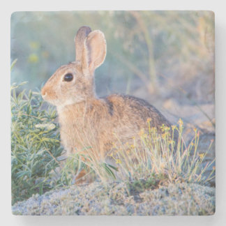 Wyoming, Sublette County, Nuttall's Cottontail 3 Stone Coaster