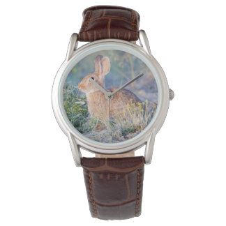 Wyoming, Sublette County, Nuttall's Cottontail 3 Watch